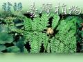 發現台灣植物